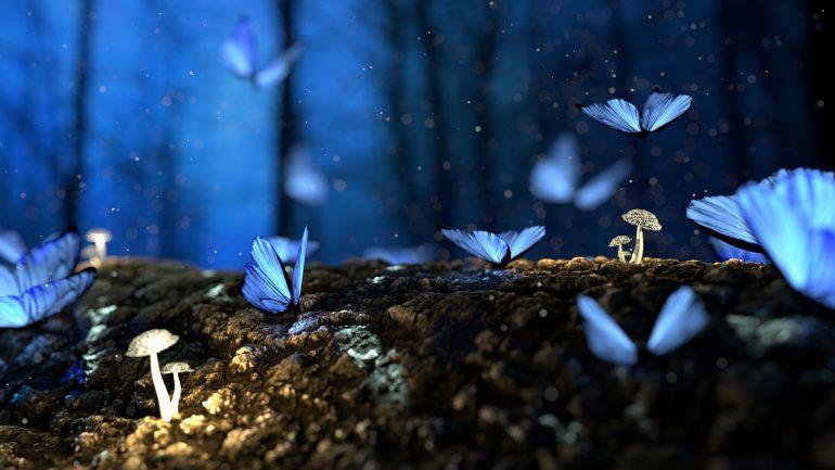 Le farfalle sono messaggere spirituali. Scoprite cosa vogliono comunicare