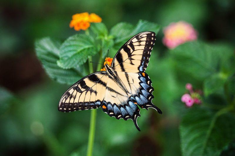 I messaggi delle farfalle