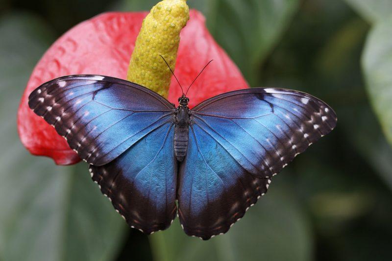 Ecco perchè le farfalle sono delle messaggere