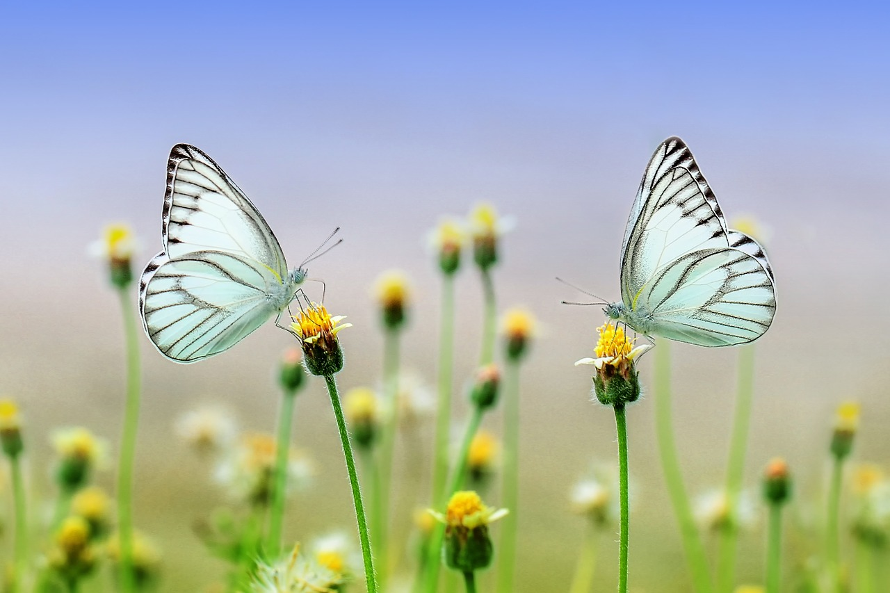 Le farfalle sono messaggere
