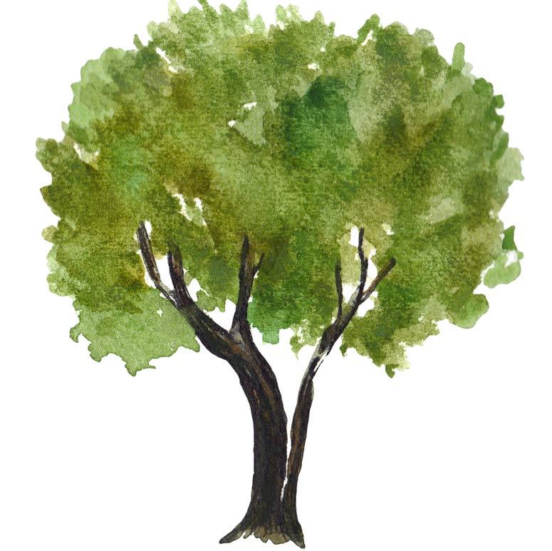 il test dell'albero di Karl Koch