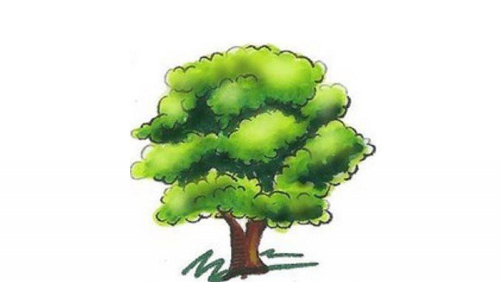 Disegno di un albero