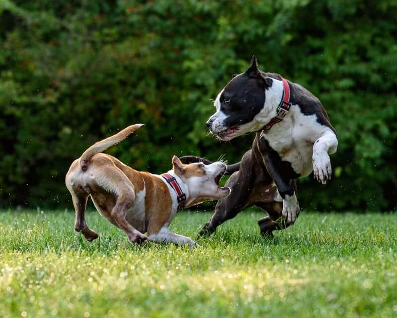 I cani randagi non esistono più in Olanda