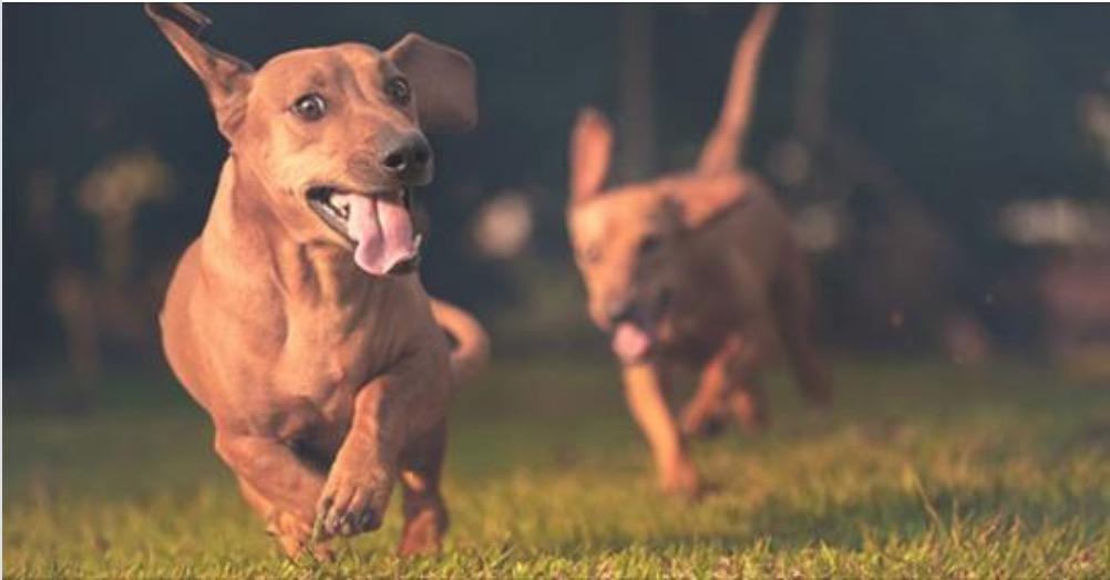 Cani randagi in Olanda: il primo paese al mondo in cui non esistono