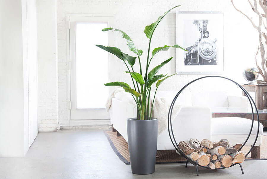 I benefici delle piante