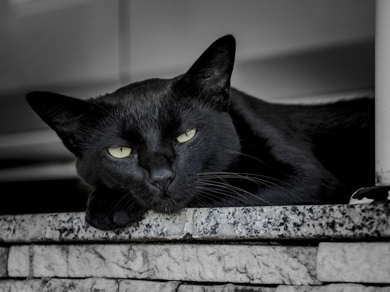Gatto nero su un davanzale