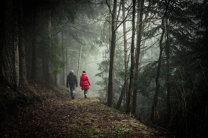 Passeggiata in un bosco
