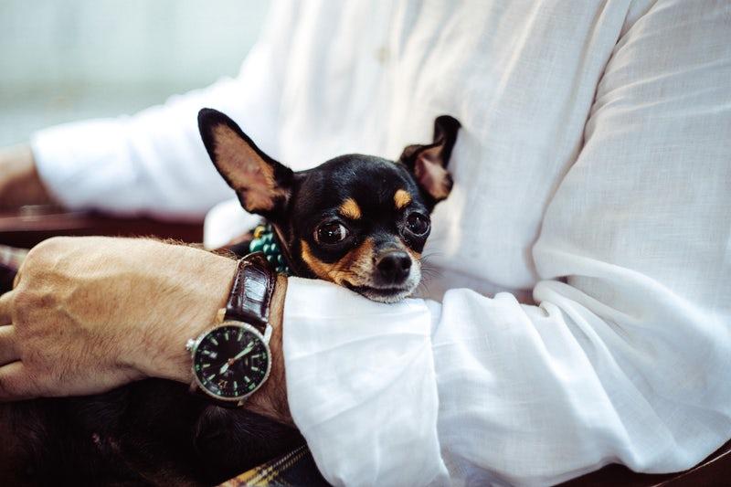 Cane in braccio ad un uomo