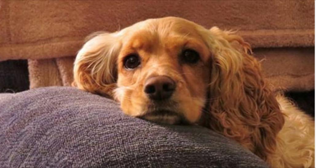 Photo of Non lasciare mai un cane da solo a lungo, perché soffre.  E molto!