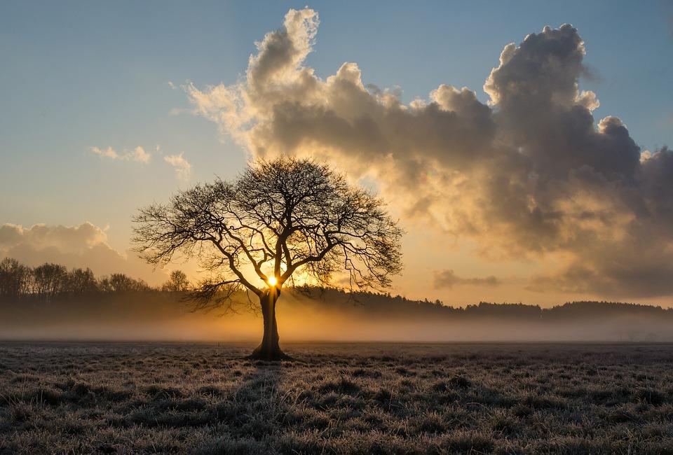 albero e data di nascita