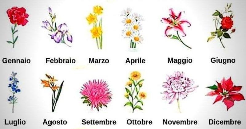 Photo of Scopri il fiore del tuo mese di nascita e leggi il messaggio che ha per te