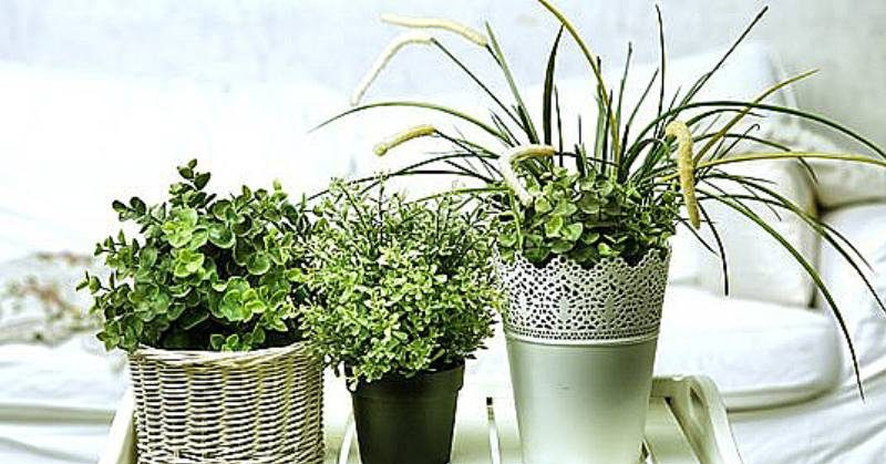 piante donne