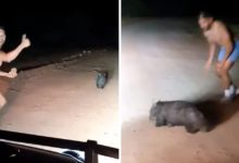Photo of Il poliziotto lapida un animale indifeso e impaurito. Il video indigna il web