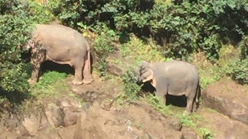 6 elefanti muoiono nel tentativo di salvarsi a vicenda