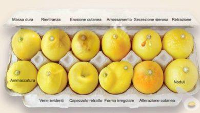 Photo of La foto dei limoni che potrebbe salvare una vita. Condividila anche tu