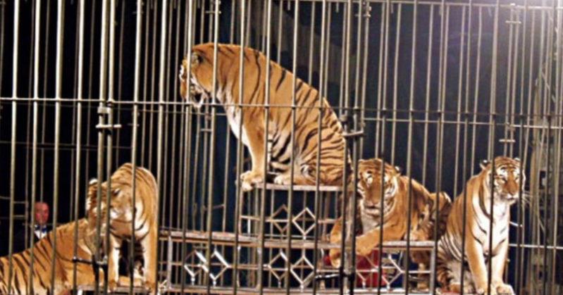 La Campania dice no al circo con gli animali