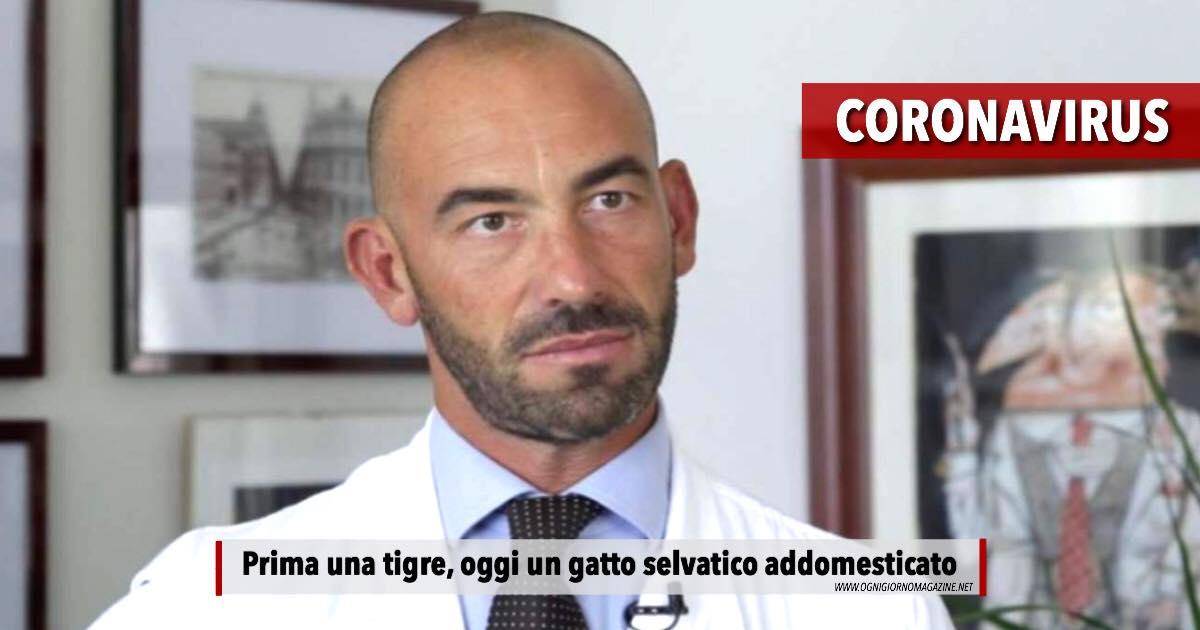 Bassetti, il Coronavirus da tigre a gatto