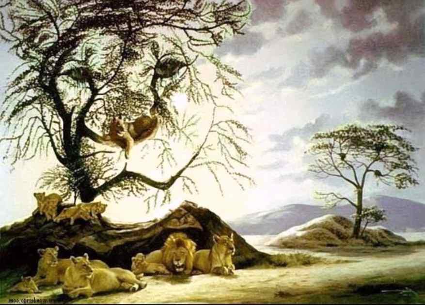 Trova il numero di leoni nell'immagine