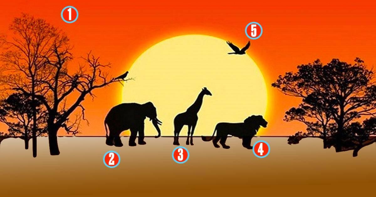 Cosa ti attrae nella savana africana