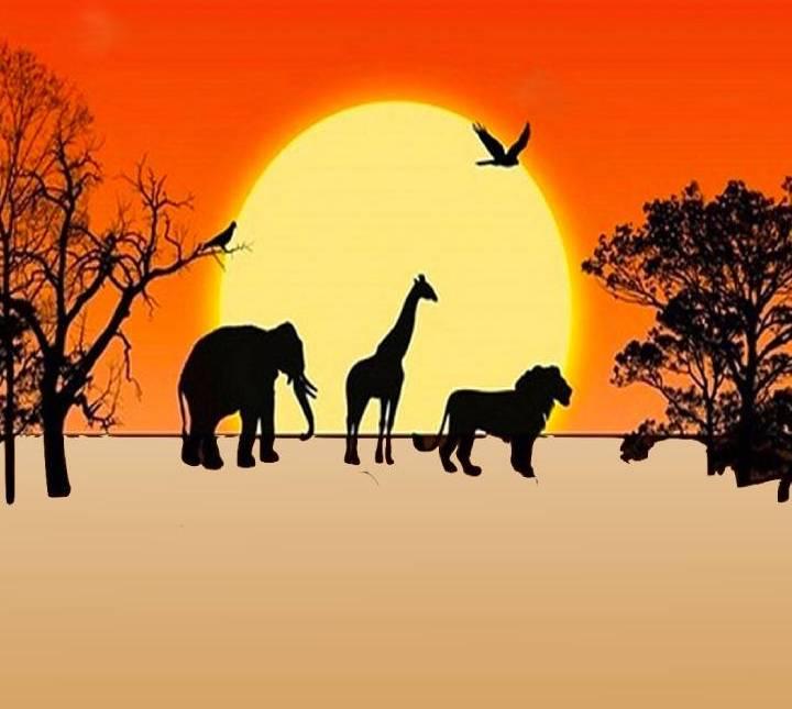 Test animali nella savana africana