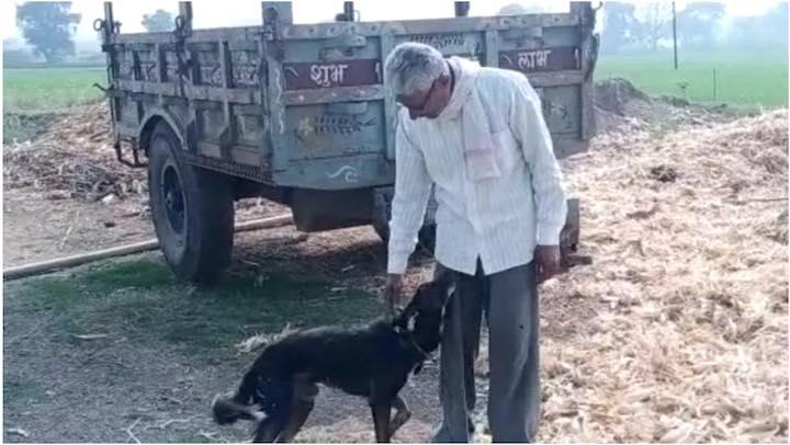 Agricoltore lascia l'eredità al suo cane
