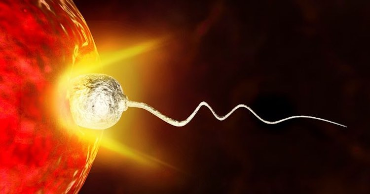 ovulo sceglie lo sperma e non il contrario